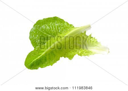 two romaine lettuce leaves isolated on white