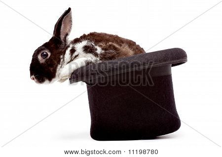 Rabbit Sitting In A Black Hat