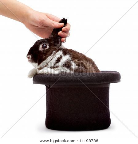 Pulling rabbit out of hat