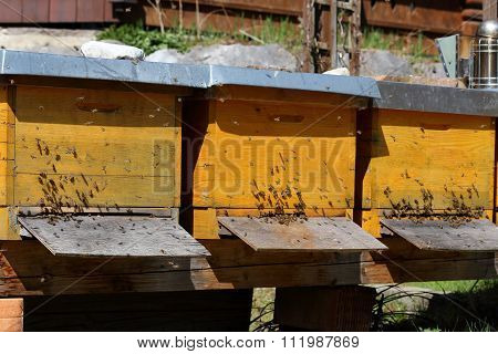 Some Bee Hives