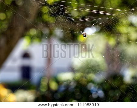 Spiny Orb Weaver Spider In Web