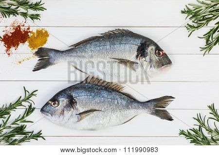 Fresh Raw Dorado Fish On White Wooden Table With Rosemary. Top View