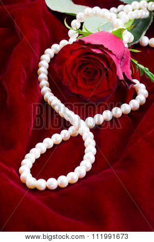 red rose on velvet
