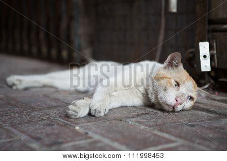 Feral street cat taking a rest on a dirty dusty floor