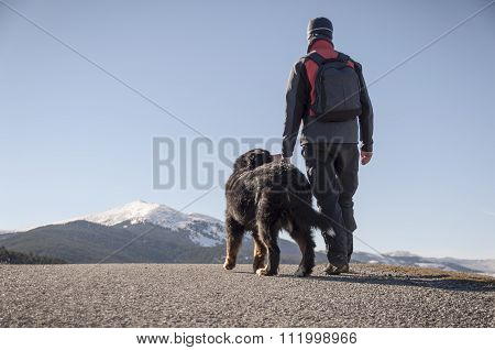 Trekking with your pet by the mountain road