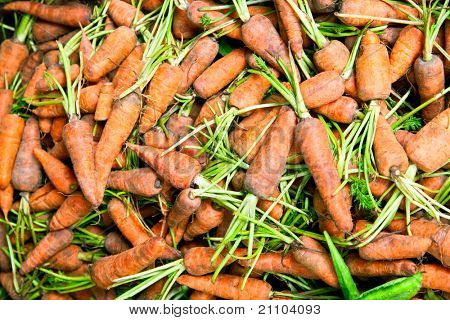 Harvested fresh carrots in container for sale in Sri Lanka