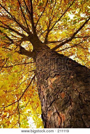 Surface Of Chestnut  Bark