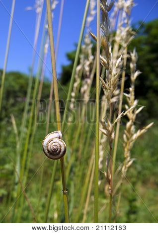 Snail On The Dry Grass