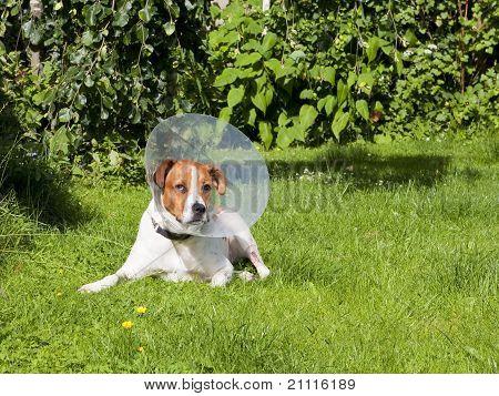 Canine Patient