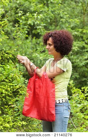 Woman Picking Fir Buds