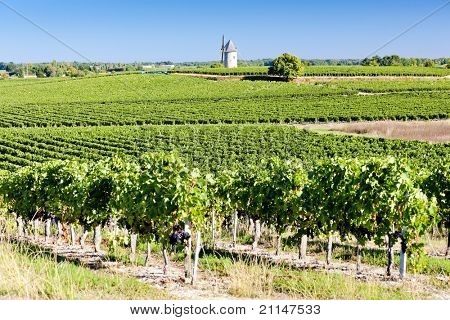 vineyard with windmill near Blaignan, Bordeaux Region, France