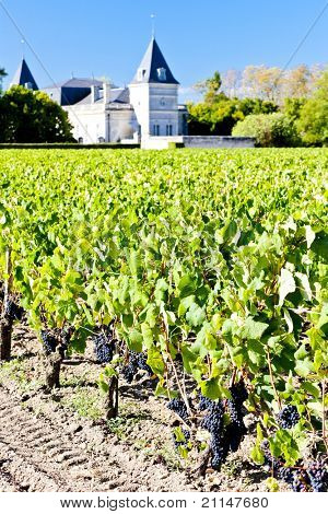 vineyard and Chateau Tronquoy Lalande, Saint-Estephe, Bordeaux Region, France