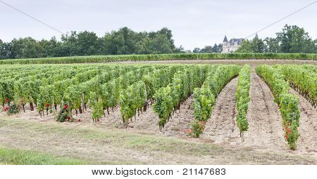 vineyard, Sauternes Region, France