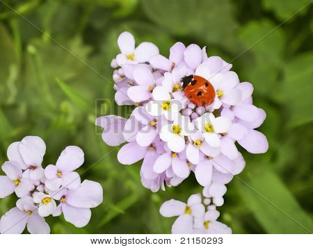 An image of a beautiful ladybug in the garden