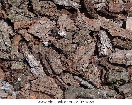 pine's bark texture