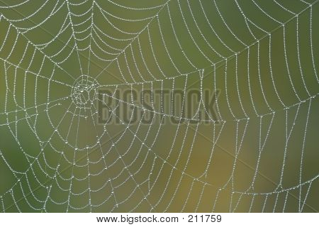 Morning Spiderweb