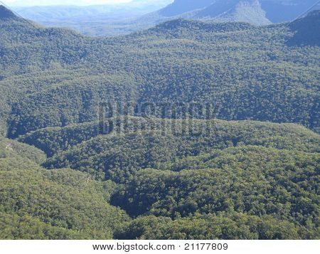forest in the blue mountains