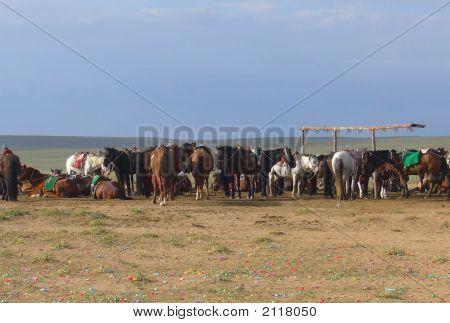 Pferde in der inneren Mongolei