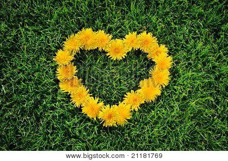 dandelion Heart On A Grass