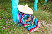 Постер, плакат: Мексиканские Сомбреро ленивый шляпы человек пончо НПД в сад типичная тема