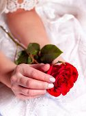 Holding single red rose in woman hands. Flowers in wedding or valentines day. Female glamour bride h poster