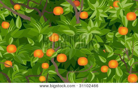 tangerine tree foliage seamless background