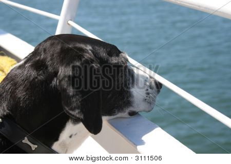 Dog Looking Over Water