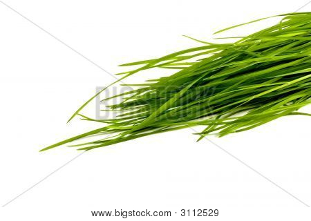Nice Green Grass Isolated On White Background