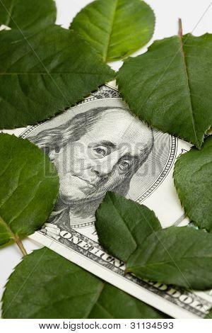 Dollar Among Green Leaves