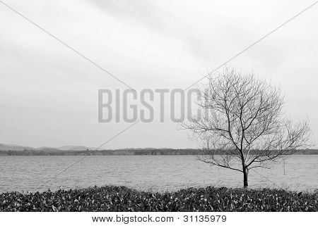 Boat And Tree In Bangpra Reservior,thailand