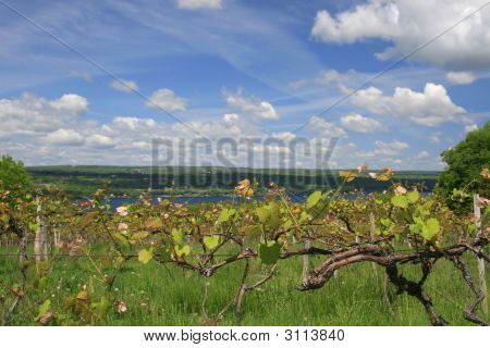 Vineyard, Wine Making