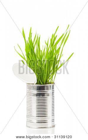 Wheatgrass orgánico fresco en lata reciclada sobre fondo blanco