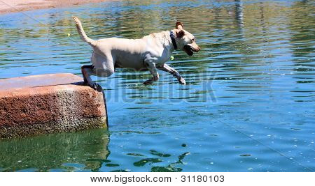 White Labrador Retriever Jumping Off Dock
