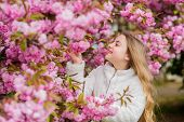 Sniffing Flowers. Child Enjoy Warm Spring. Girl Enjoying Floral Aroma. Kid On Pink Flowers Of Sakura poster