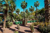 Majorelle Garden is a botanical ,tropical garden and artists landscape garden in Marrakech, Morocco poster