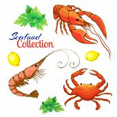 Decorative Seafood Vector Set. Realistic Sketched Prawn Or Shrimp, Lobster, Crayfish And Crab With L poster