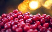 Fresh Sweet Red Cherry In A Bowl. Ripe Sweet Cherry. Fresh Berries. Harvest Of Sweet Cherries. Ripe  poster