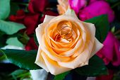 Two Wedding Rings Lie On Yellow Rose On A Background Of Flowers. Gold Rings With Flowers. Preparing  poster