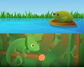 Reptiles Amphibians Banner Set. Cartoon Illustration Of Reptiles Amphibians Banner Set For Web Desig poster