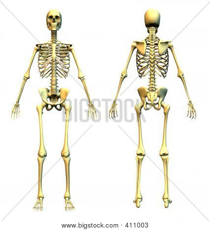 Skeleton Front And Back