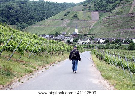 Walking through the  wineyards