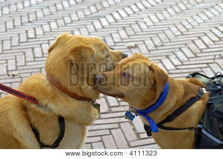 Dog Pet Greeting