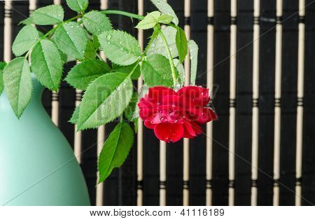 one red rose in a green vase