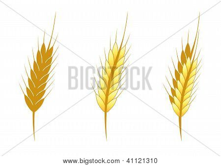 Stylized Ear Of Wheat