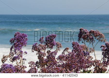 Flowers by the shore