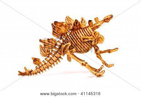 Dinosaur Skeleton  On White Background