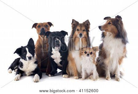 Seis perros