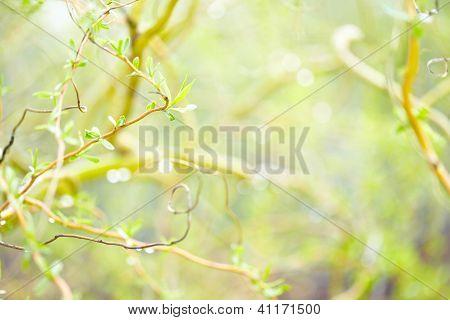 Spring or Summer Nature Background