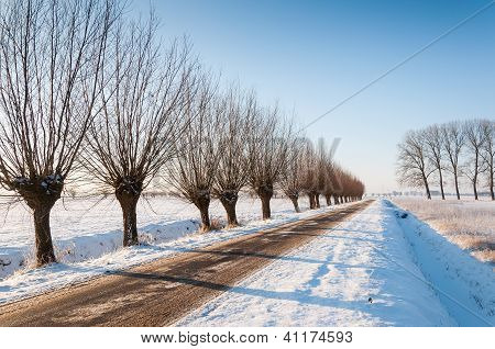 Country Road In A Wintry Netherlands