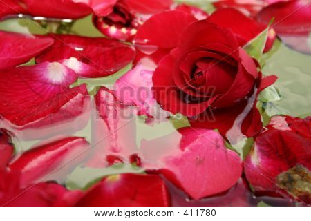 Floating Rose Petals 3